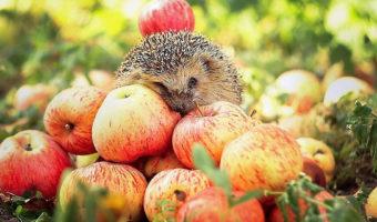 Инструкция по посадке яблонь летом