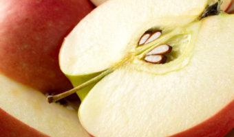 Инструкция по посадке яблони из семечек в саду