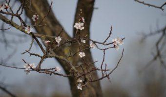 Инструкция по обрезке яблони весной