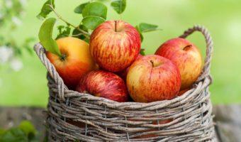 Особенности посадки яблонь в Беларуси